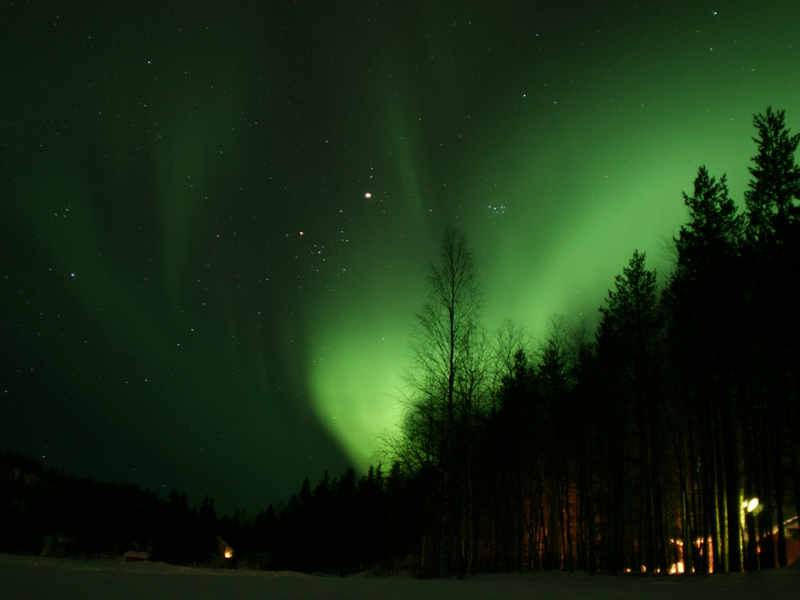The northern lights move away behind the trees