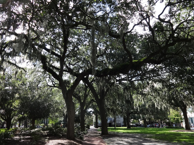 A typical Savannah view in the historic district