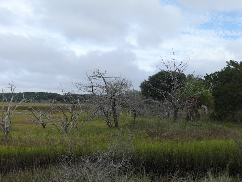 Dead trees in the swamp