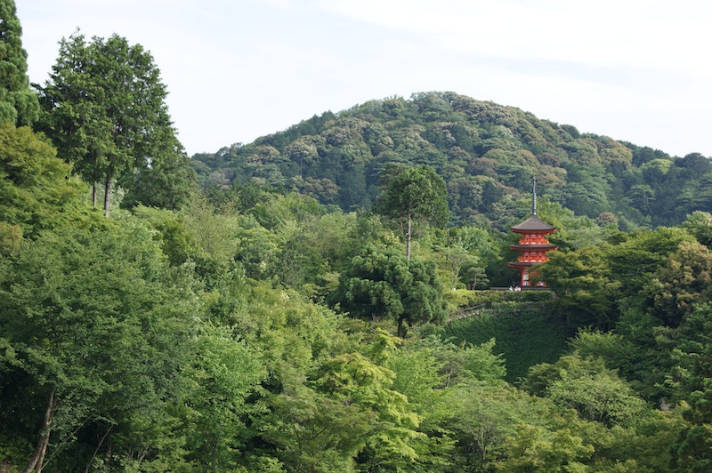 A pagoda amid the woods