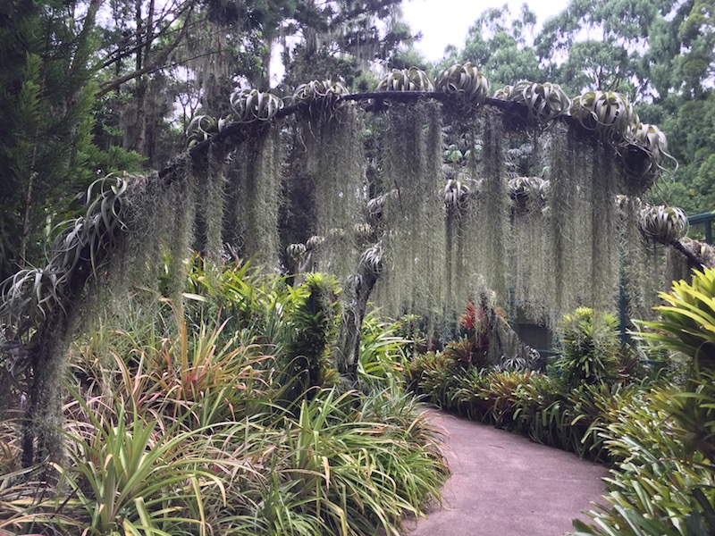A Spanish moss arch in the orchid garden