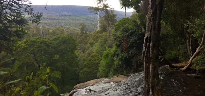 The view from the top of the Russell Falls
